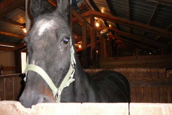 9 points to know the personality of year of the horse