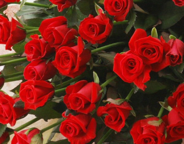 7 romantic ways to propose using language of red roses