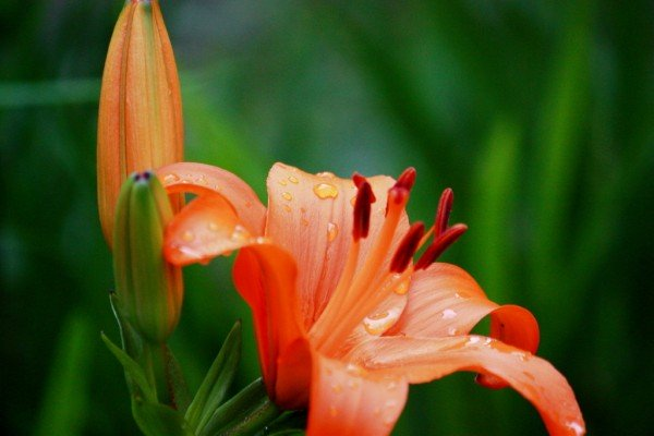 7 things to see when you give a lily flowers in celebration☆