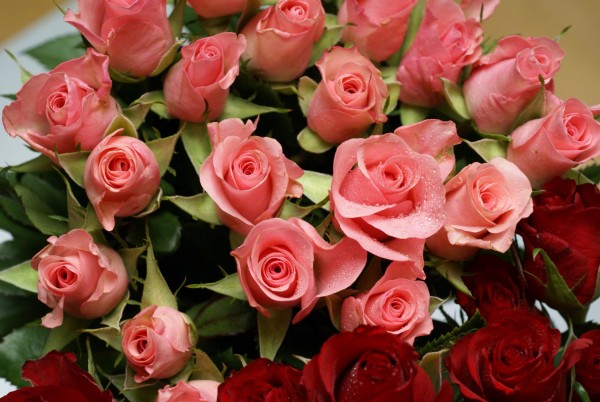 7 Rose Meanings that Express Emotions