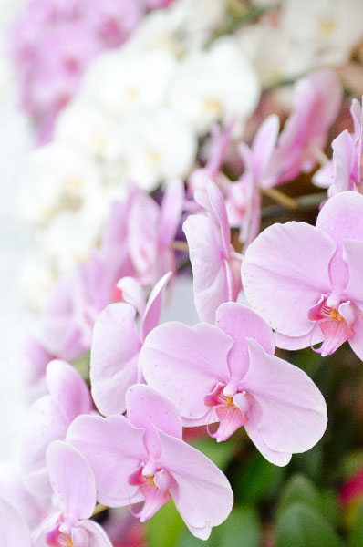 9 important points how to grow orchids