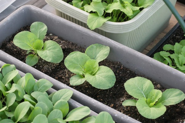 7 prepared tools in growing vegetables in a planter☆