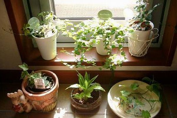 7 plants to improve happiness in room with Feng Shui