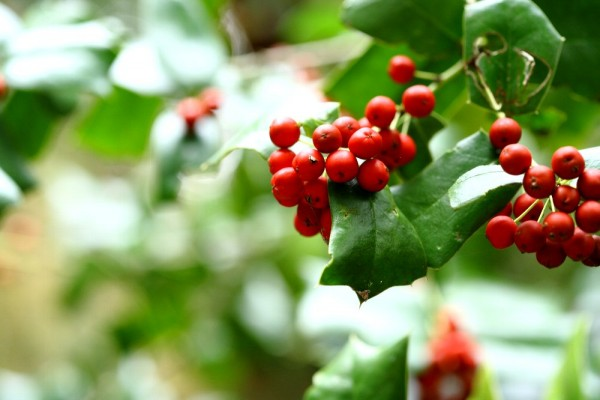 7 reasons why language of the holly support your future