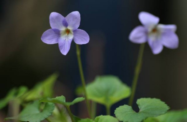 7 selections of the gift matching for the violet flower