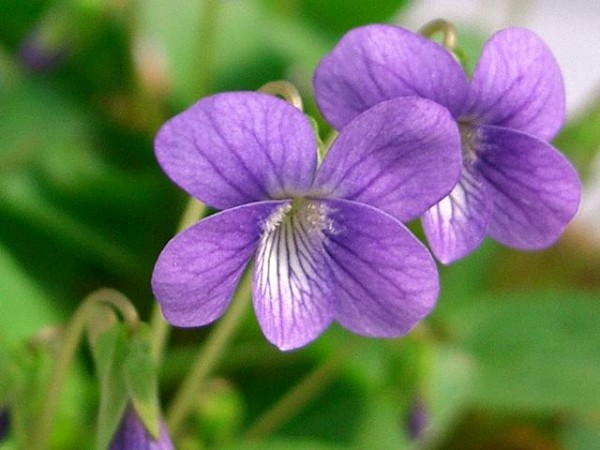 7 ways to cheer friends' love up with violet words