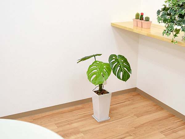 7reasons Monstera Floriography Has Good Effect on Home