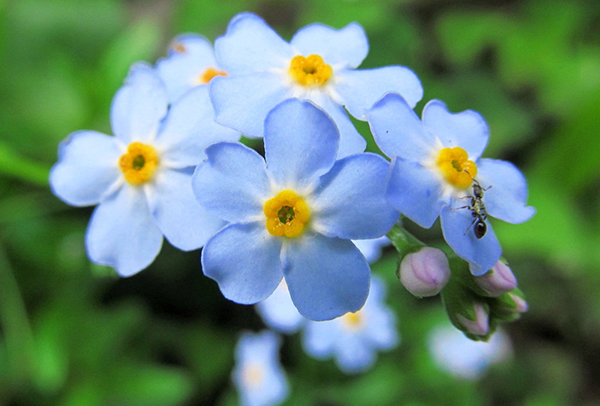 With the meaning of forget-me-nots☆7 flowers about love