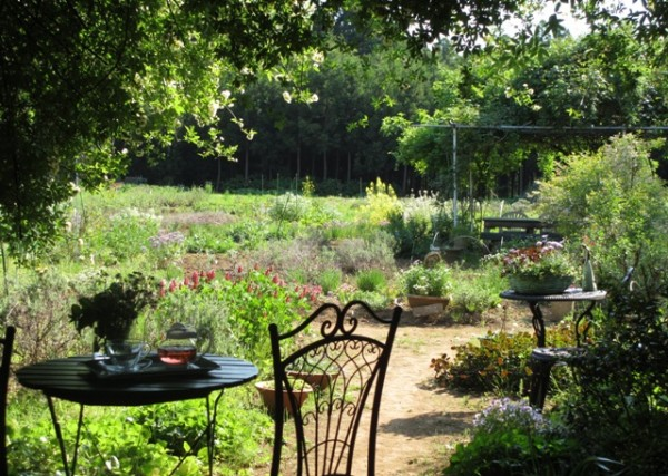 7 points for you to enjoy the herb garden travel